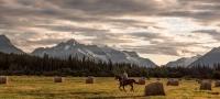 骑马和牧场体验