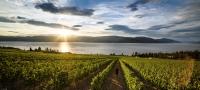 酒庄和葡萄酒之旅